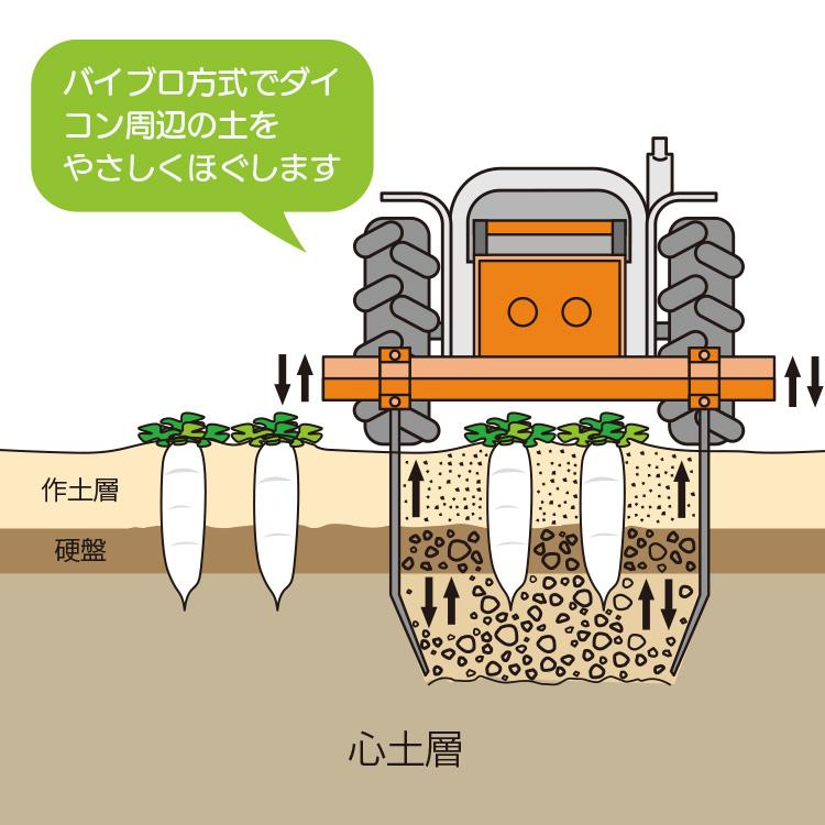 ダイコン収穫作業開始